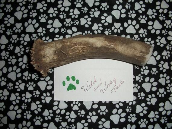Large Deer Antler Dog Chew (Lot 440)