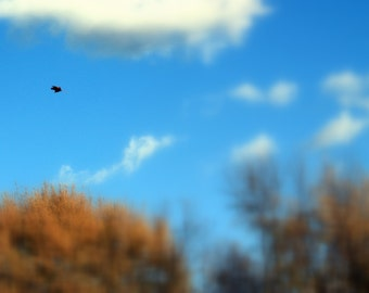 Lonely Leaf Falling From The Sky