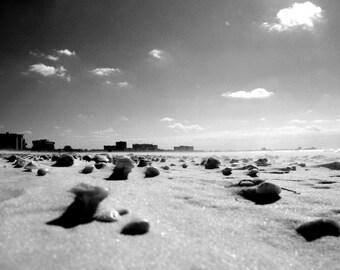 Shells on Lido Beach, Florida Photograph