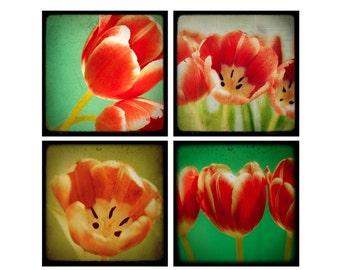 SALE: 25% Off Tiptoe -Set of Fine Art TTV / Vintage Inspired Photographs - Flowers - Blossoms