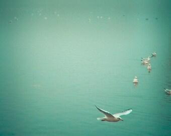 Large nature print, gallary art print, Bird photography, Nature photography - Soul Bird
