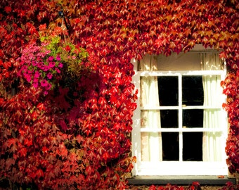 Fall Photography - Fine Art Photography Print - An English Autumn in red, orange and white