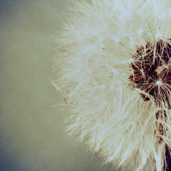 "Flower photography, Dandelion print,nature art print - ""Puff"""