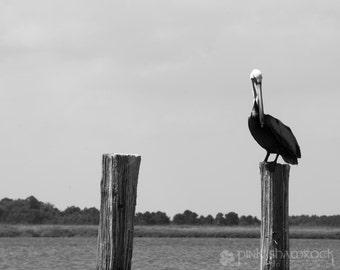 Pelican on a Post - Fine Art Print