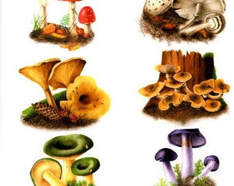 Set of Three Mushroom Prints from watercolor paintings