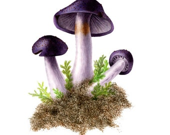 Purple Mushrooms - Cortinarius Violarius, watercolor painting