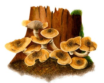 Brown Mushrooms - Armillaria Mellea, watercolor painting