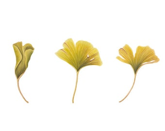 Ginkgo Leaves- Watercolor Painting