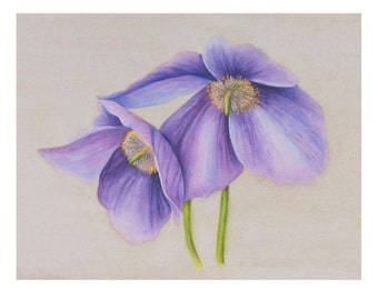 Himalayan Blue Poppy, watercolor painting