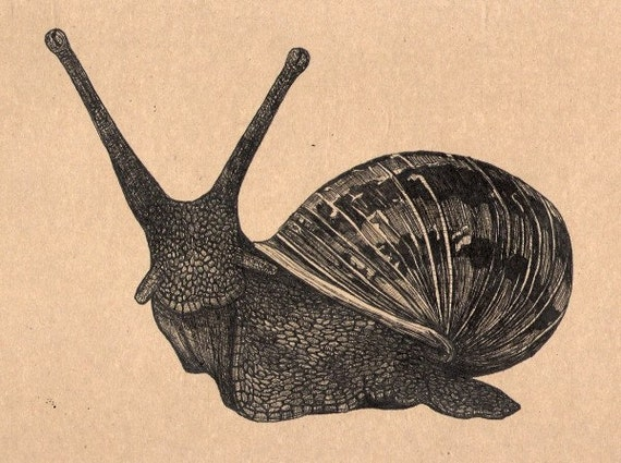 Snail Art drawing on brown paper