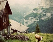 Morning in the Alps - Fine Art Photograph