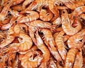 Shrimp in France - Fine Art Photograph 5x7