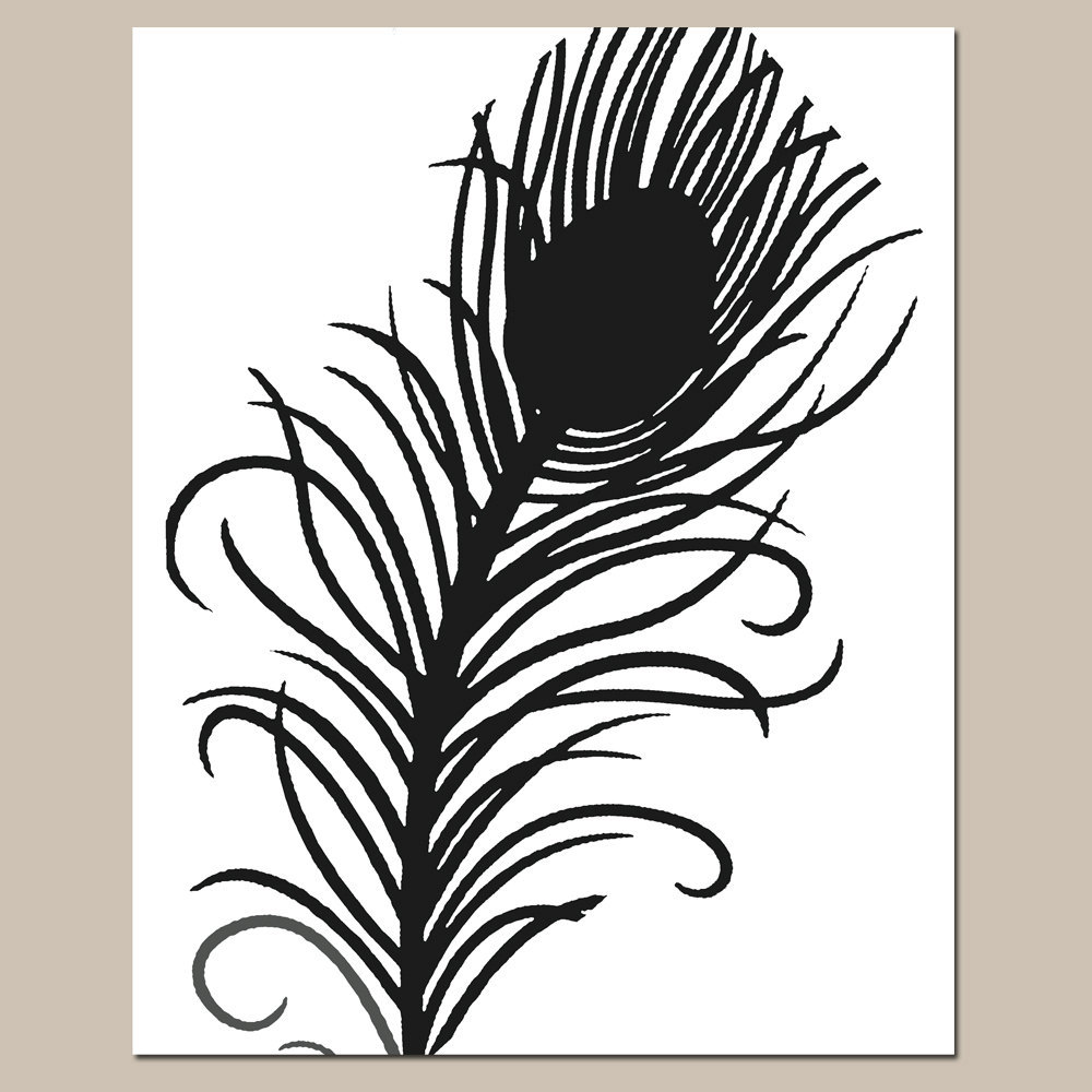 Black And White Peacock Feather Images