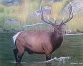 Elk Original Pastel Drawing