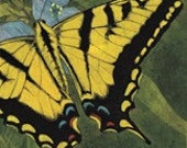 Tiger Swallowtail Butterfly Matted/Signed Giclee  Print