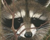 Free Shipping-Raccoon Matted/ Signed Giclee  Print - Use Coupon Code: HOLIDAY2011