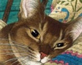 Abyssinian Cat Signed Giclee  Print
