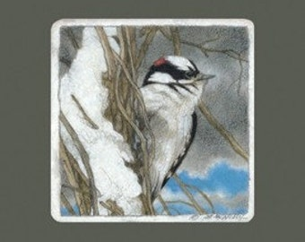 Downy Woodpecker Signed Giclee  Print