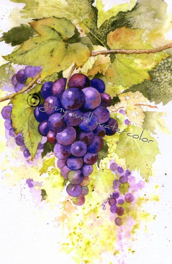 grape cluster matted print by ginny wall by allnaturesings. Black Bedroom Furniture Sets. Home Design Ideas