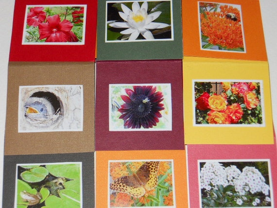 Set of 9 Mini Cards With My Original Photo Images Of Butterfly, Frogs, Bees, Bird, And Flowers