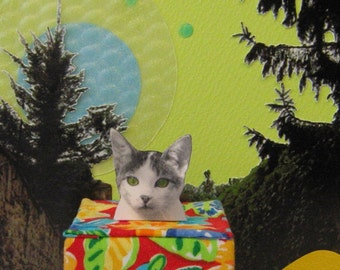 Cat in the Box - 5x7 Art Print of Original Photograph Collage Signed Green Red Wall Décor
