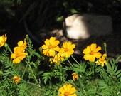 Fall Shadow Flowers by r dehner
