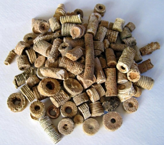 Crinoid Fossils, 115 Pieces in Specimen Jar, Sea Lillies, Natural Finds, Nature Beads, Fairy Money, Terrarium, Aquarium