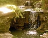 Botanic Gardens Waterfall 8x10 Print