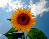 Sunflower in the Sky 8x10 - 10% of proceeds go to help victims of domestic violence and sexual assault