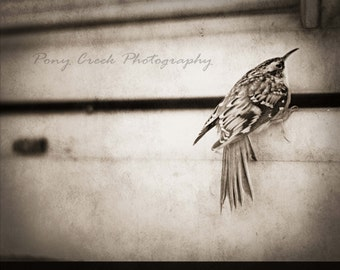 Little Bird Vintage 8 x 10 Fine Art Photograph