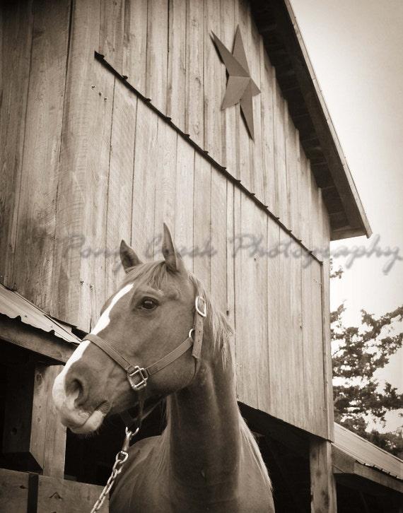 Big Mack Horse Black & White 8x10 Fine Art Print