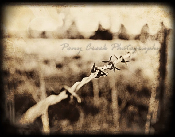 Barbwire in Vintage 8x10 Fine Art Photograph