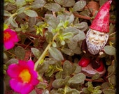 Fantasy Gnome in Garden Fairytale Photography- There are gnomes in my garden 10x10