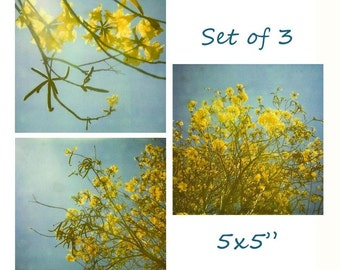 "In Full Bloom Polaroid Photo Set of 3 5x5"" Prints"