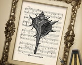Spiny CONCH SHELL illustration art print over an upcycled vintage sheet music page Buy 3 get 1 Free