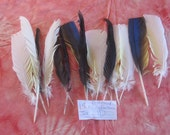 15 Distressed Miscellaneous Cruelty Free Feathers Set 11
