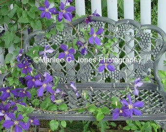 Purple Clematis on Wrought Iron Bench Fine Art Vermont Photo: Multiple Sizes