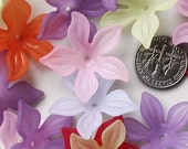 Gilia Flower Beads - Large, Mixed Color, 27mm, 14pcs 5 Petal Veined
