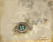 etsy shop banner bird nest blue eggs six piece etsy shop design