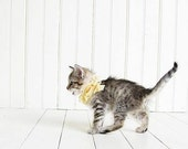"SALE Kitten Photography, ""Small"" 4x4 Metallic Print, kittens, shabby chic, photo, white, yellow, nursery art, child's room, cottage decor"