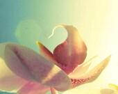 Orchid Photography, nursery room decor, macro flower, abstract floral, pastel peach, pink, aqua, modern, oriental, 8x10 Metallic Print