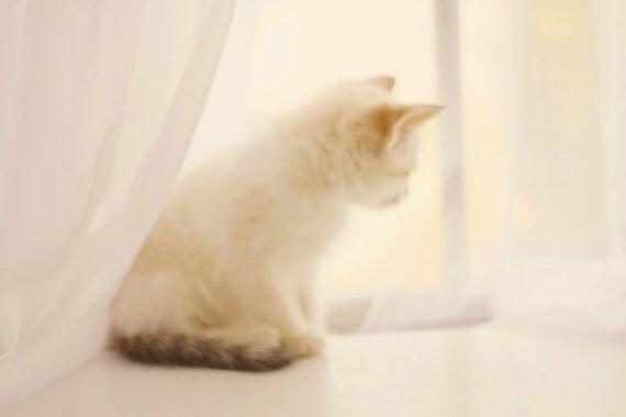 Kitten Photography, Baby Girl Nursery Art, Cream & White Wall Art,  Soft Cream Decor, Baby Kitten Photo, Monochromatic, Cat 8x10 11x14 Print