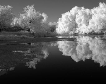 "Black and white photocard, 7""x5"", of Texas creek and trees."