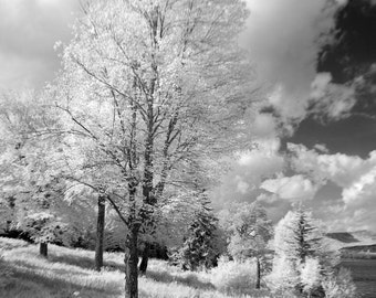 "Black and white photo notecard, 4.25""x5.5"", of trees and meadow in rural New Hampshire."