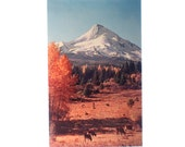 Vintage Postcard, Mt Hood Oregon