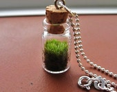 Terrarium Necklace, Terrarium, 925 Sterling Chain,Gift For Her, Birthday Present, Gift Under 25