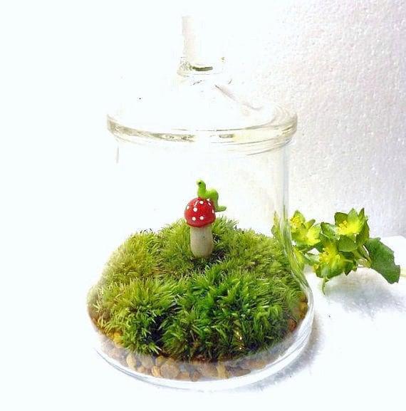 Terrarium,  Moss Terrarium,  Glass Terrarium,  Paperweight,  Moss,  Vintage Jar