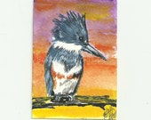 ACEO Original  King Fisher Aceo Art