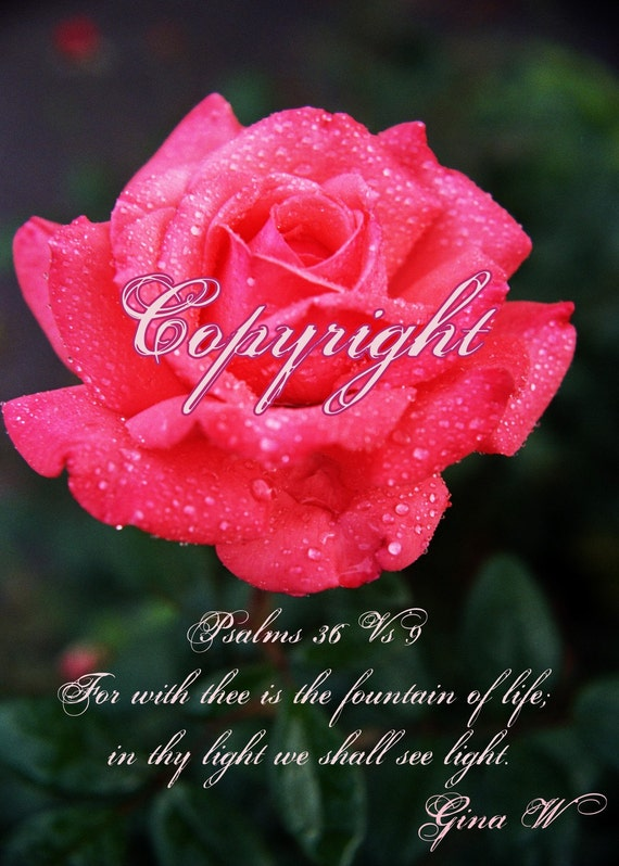 Raindrops & Rose, Inspirational, Red Rose,  Wall Art Decor,  Psalms 36-9
