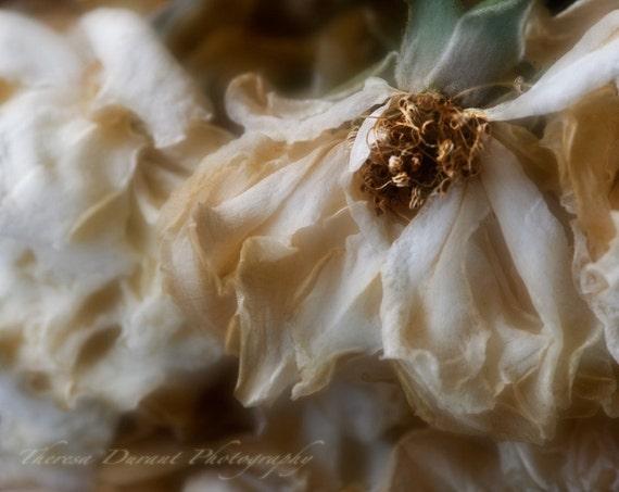 Fine Art Nature Photography- Fine Art -Floral Photography- Nature Photography- Home Décor- Rose Print- flower Print- Boudoir photography